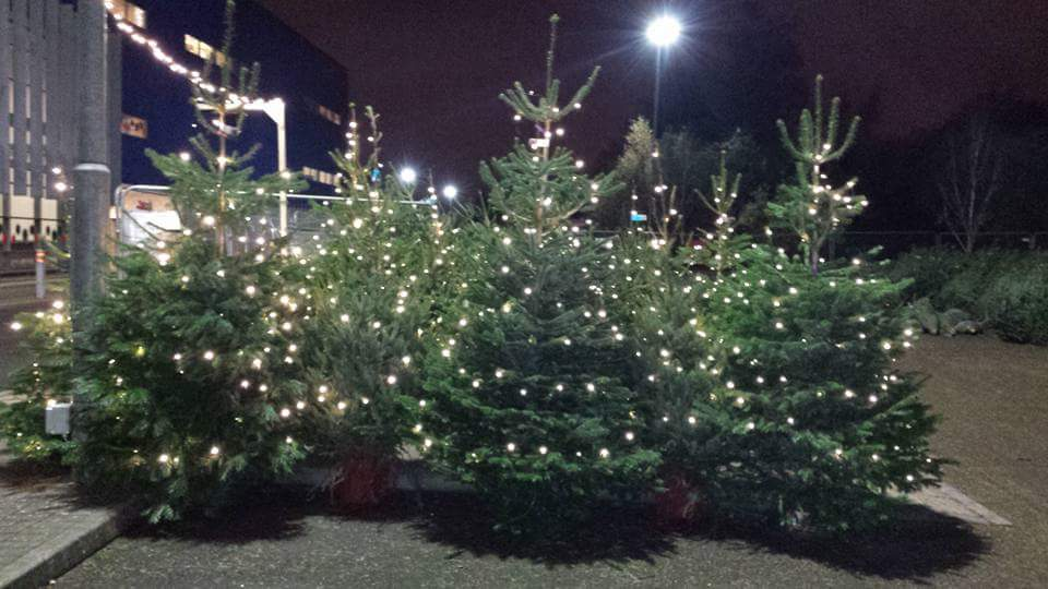 Our Christmas Trees. IKEA Cardiff 2015 Nordman fir